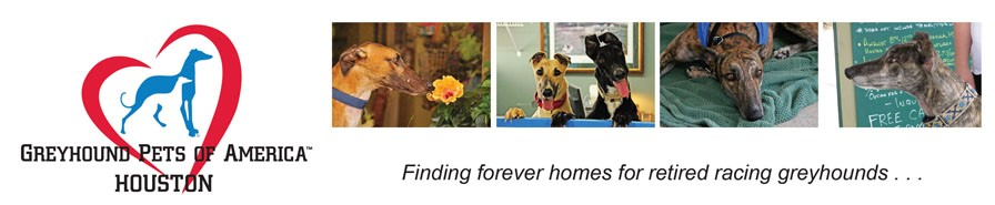 Greyhound Pets of Houston